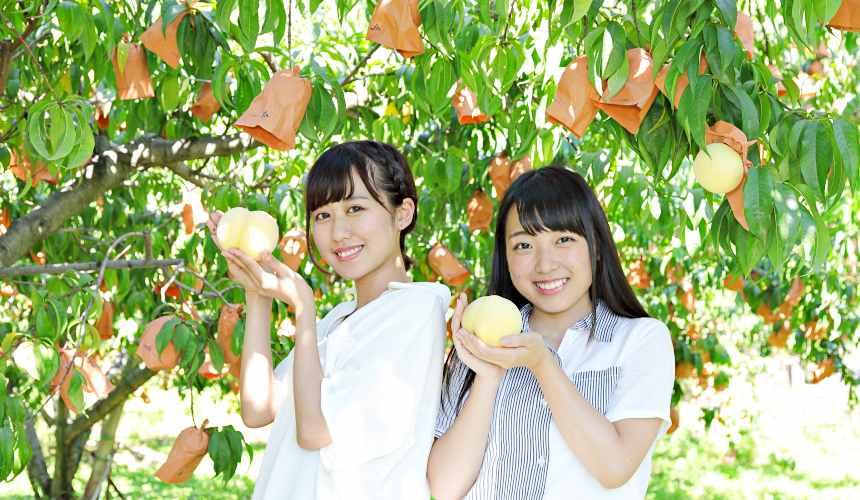 岡山採白桃