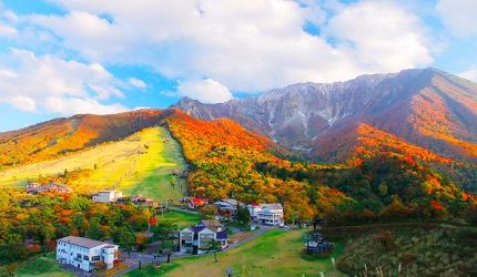 日本山陽山陰楓葉推薦鳥取大山