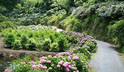日本岡山「美咲町」的「美咲花山園」