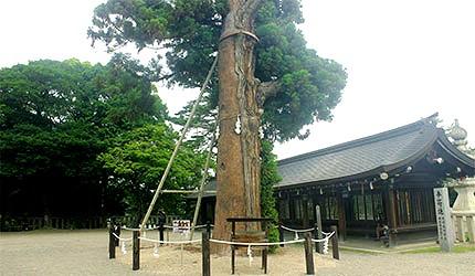 日本冈山吉备津彦神社千年神木平安衫
