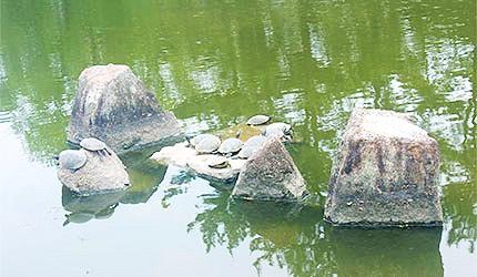 日本冈山吉备津彦神社龟岛神社乌龟石