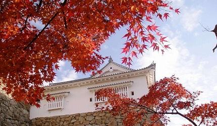 日本岡山縣津山市的津山城(鶴山公園)紅葉季節