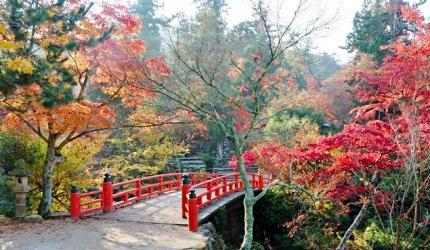 日本山阳山阴枫叶推荐广岛宫岛红叶谷