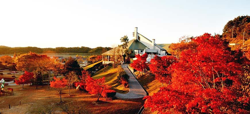 漫遊絕美花海、棚田絕景,追隨福山雅治的腳步玩日本岡山「美咲町」