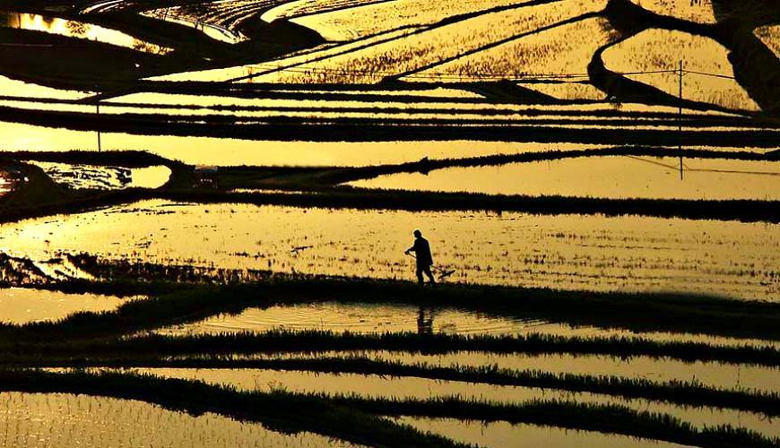 日本冈山「美咲町」的棚田景色
