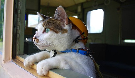 日本岡山「美咲町」的「吉ヶ原」廢棄車站貓咪站長