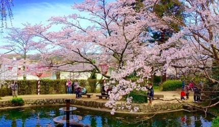 日本山阳山阴樱花鸟取打吹公园
