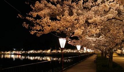 日本山阳山阴樱花广岛上野公园