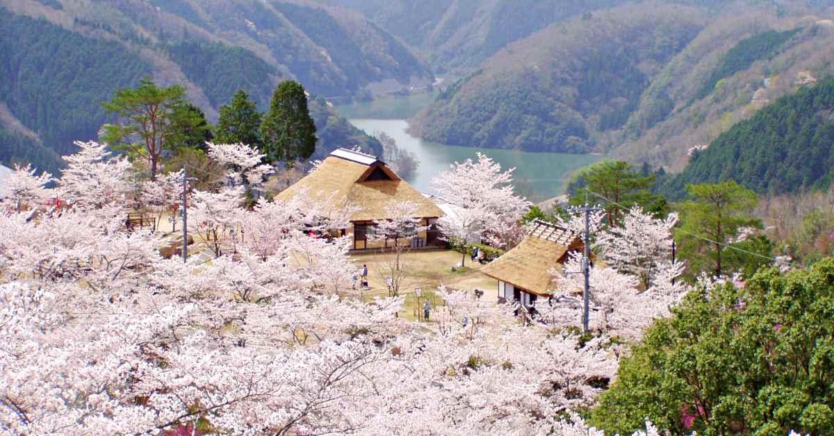 漫游绝美花海、棚田梯田梯田绝景,追随福山雅治的脚步玩日本冈山「美咲町」