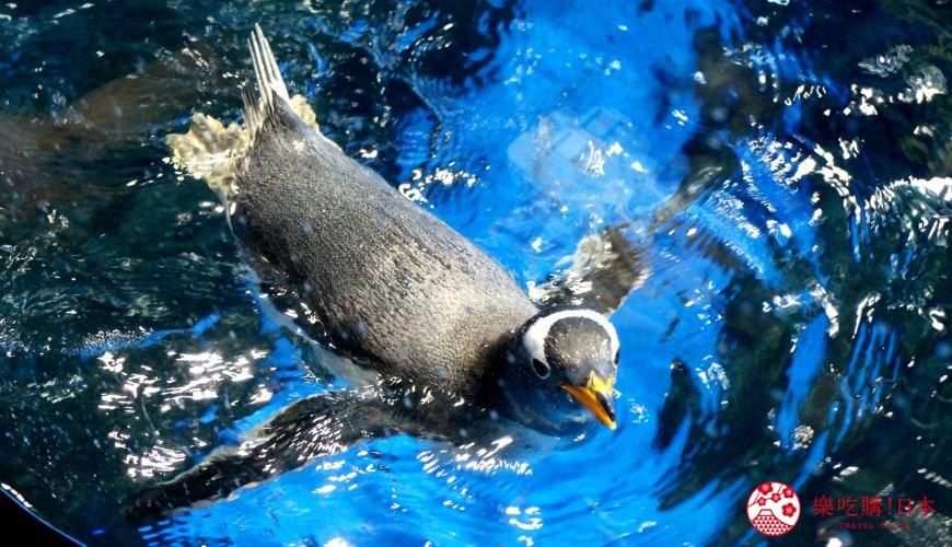下关必去景点「海响馆」:摸企鹅体验、100种河豚展示都只在这!
