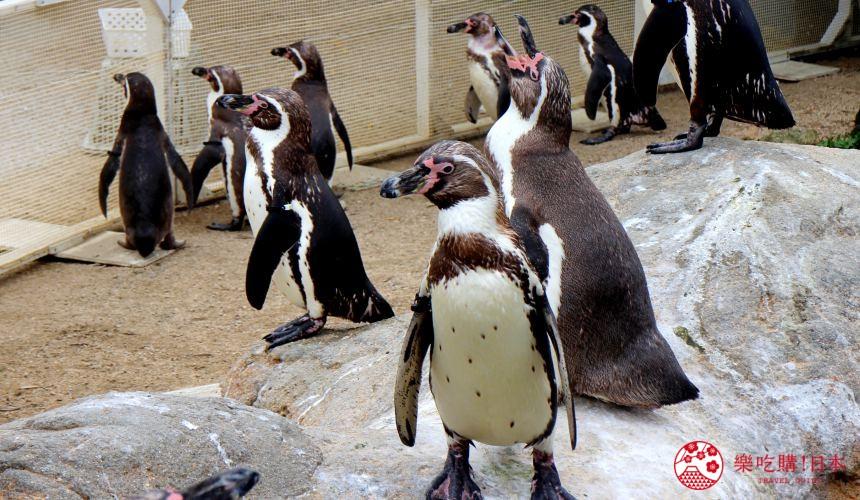 山口县下关水族馆海响馆的企鹅