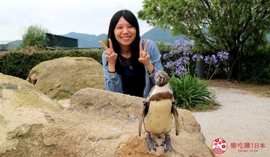 山口县下关海响馆的企鹅合照摸企鹅体验