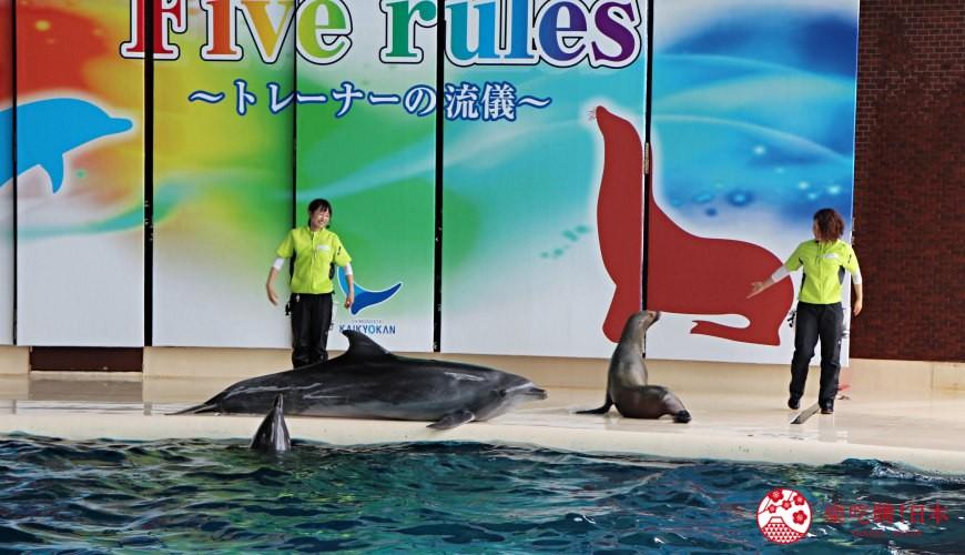 山口县下关海响馆的海豚海狮秀