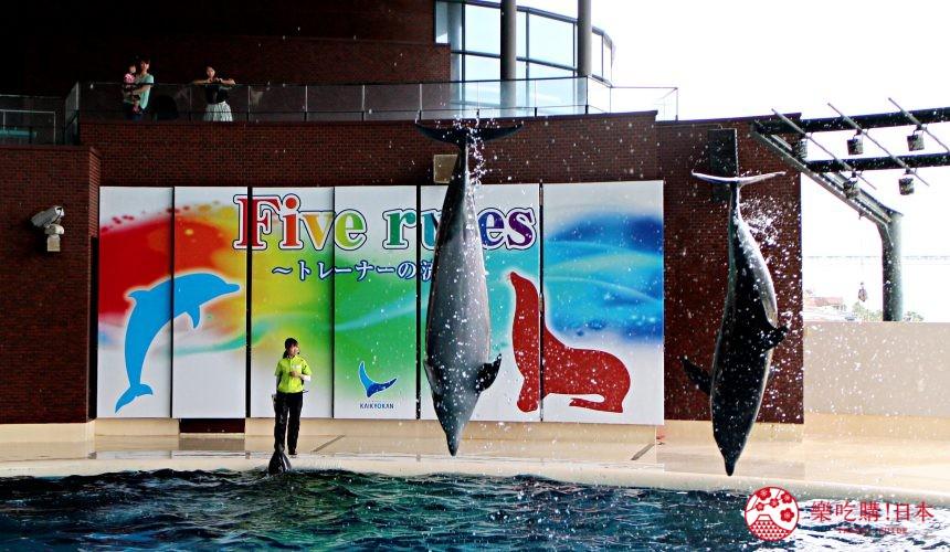 山口县下关海响馆的海豚表演秀