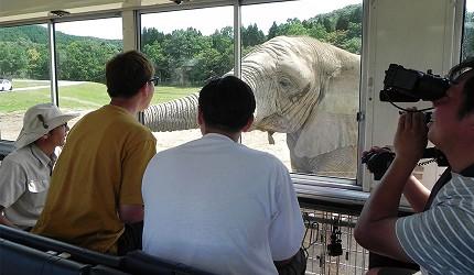 漫才少爺在秋吉台自然動物公園內體驗在巴士上餵食野生動物