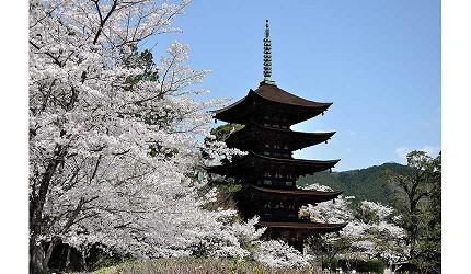 日本山阳山阴「山口市」的日本三名塔之一国宝「瑠璃光寺五重塔」