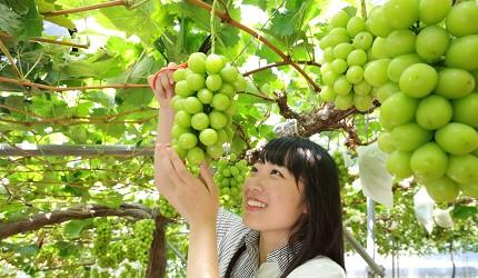 岡山自由行兩天一夜行程推薦!桃子之鄉「赤磐市」出產的麝香葡萄