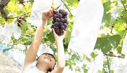 岡山自由行兩天一夜行程推薦!桃子之鄉「赤磐市」的「桃茂実苑」的摘葡萄體驗